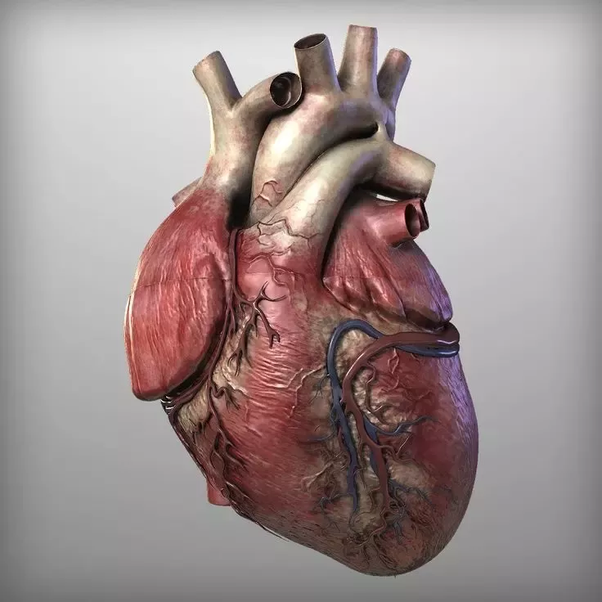 Does our heart function without any brain control? - Quora