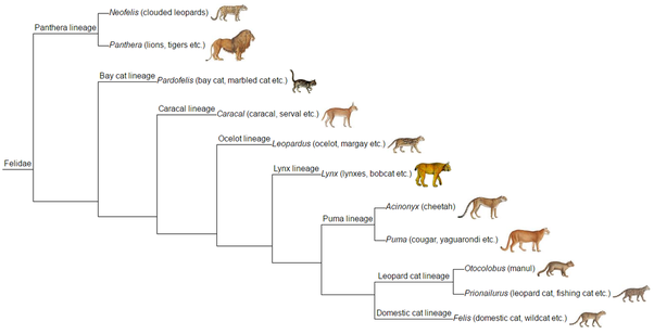 timeline of cat domestication