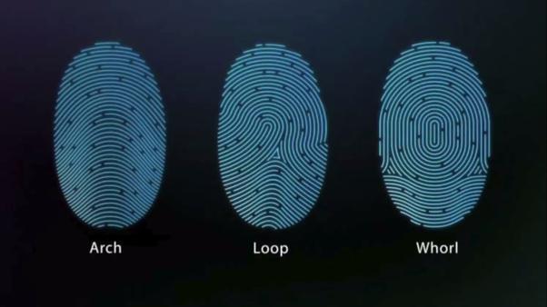 How does the biometric fingerprint scanner work? - Quora