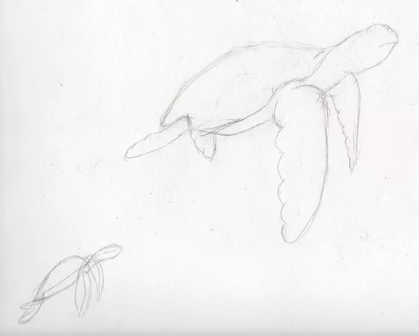 how to draw a sea turtle step by step quora