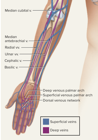 How Many Veins Are In The Human Body Quora