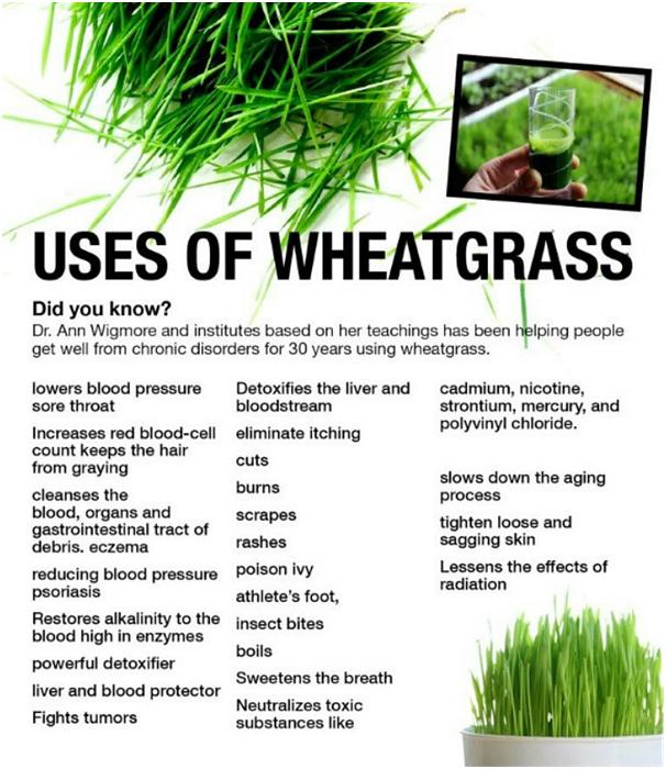 Is wheatgrass powder beneficial? - Quora