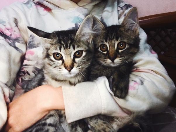 Apakah Kamu Memiliki Kucing Jika Ya Seperti Apa Kucingmu Quora