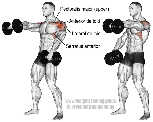 How to work out my deltoids to make them bigger and have them ...
