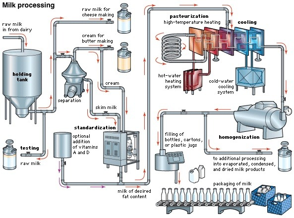 How is milk made from the cow to the grocery store quora an example of process flow diagram is displayed below the separator with the conical cover is the centrifugal separator ccuart Image collections