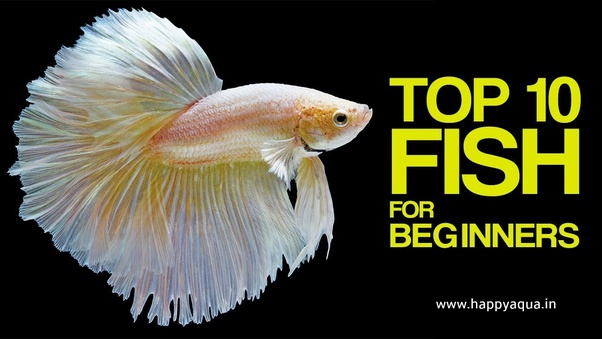 You Probably Can T Wait To Stock Your Aquarium Before Actually Go Out And Purchase The Most Beautiful Fish Get