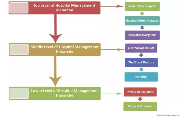 What is the organization structure of a hospital? - Quora