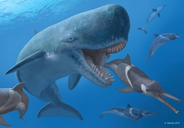 Giant Prehistoric Sea Creatures What are the co...