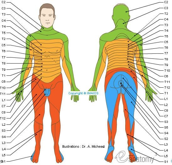 What is the evidence based dermatome region for the s at ... Dermatome Map on