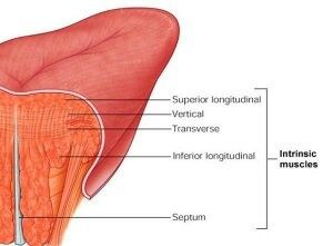 Is it normal to be able to whistle using a rolled tongue? - Quora