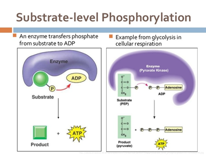 How is ATP produced in an anaerobic respiration? - Quora