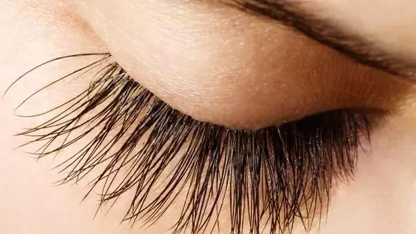 Do cut eyelashes grow back