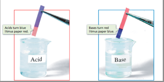 bases turn red litmus paper blue