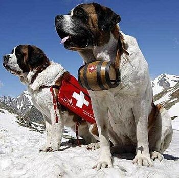 Mountain Rescue Dogs Alcohol