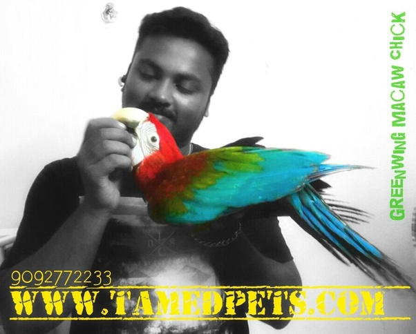 Where can I get a macaw in Chennai? - Quora
