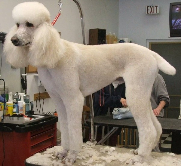 Town Country Dog Grooming