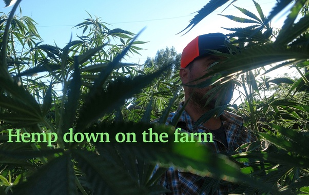 Given the legalization of Hemp in the Farm bill, will
