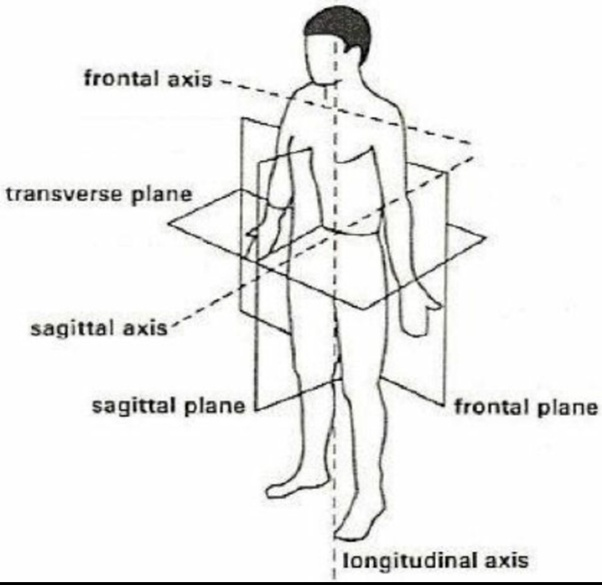 What Are The Axis And Planes Of The Human Body Quora