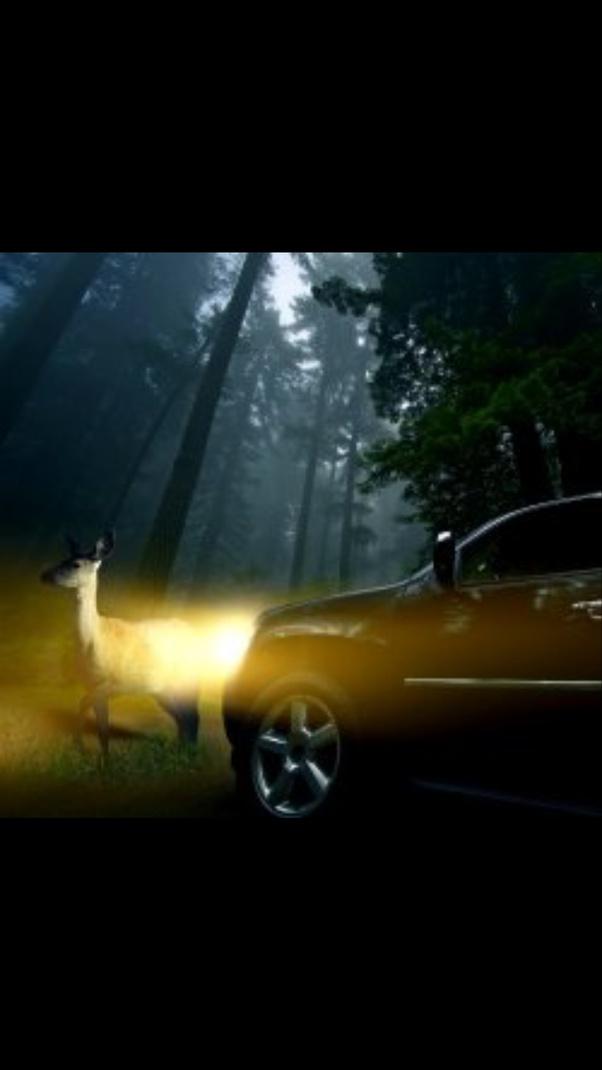 Deer in headlights look attraction