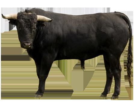 Bull sounds - YouTube
