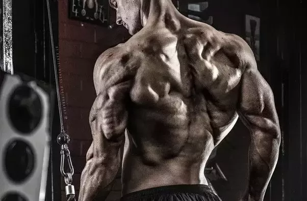 What are the best workouts for building back muscles? - Quora