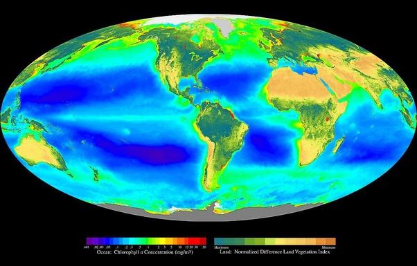 Mengapa Harus Menanam Pohon, Jika Oksigen Ternyata Banyak dihasilkan oleh laut?