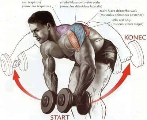 which is better for strength training free weights or