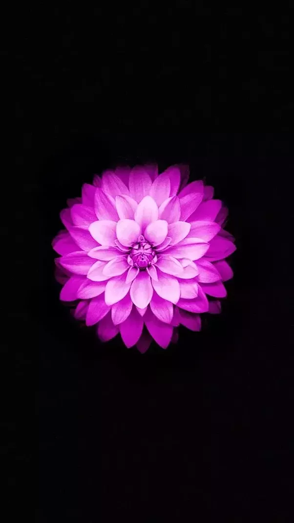 Steve Jobs Was Noted Sitting In The Lotus PosturePadmasana Yoga Like