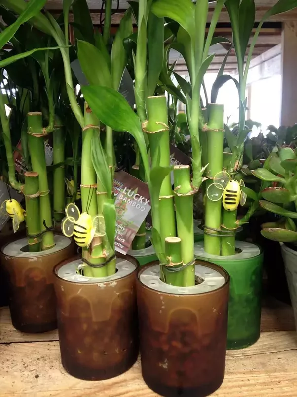 The Above Information Is From Indoor Plants Expert Best For Home