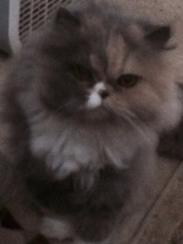 Unlike Some People Our Cat Follows >> For A Long Time My Cat Loved Me Played With Me And Purred At Me