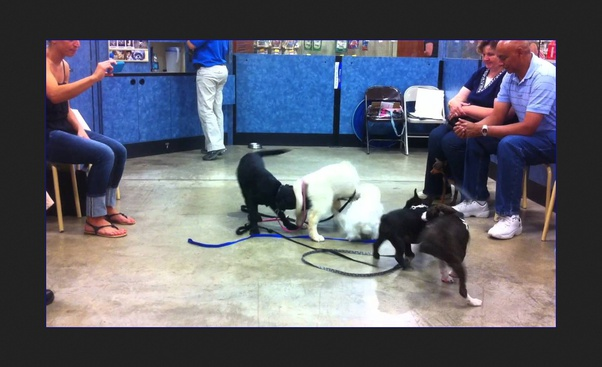 How Effective Is Petsmart S Puppy Training Quora
