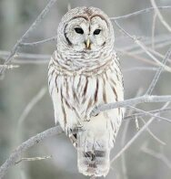 What Does It Mean If You See A White Owl Quora