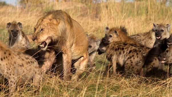 What Are Examples Of Competition In The Animal Kingdom Quora