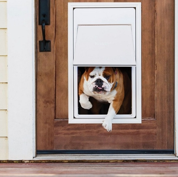 This Electronic Dog Door Is Designed For Best Execution And Outrageous  Unwavering Quality. It Is Initiated By An Ultrasonic Neckline That Opens  Consequently ...