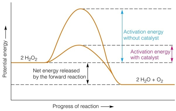 energy diagram for decomposition of hydrogen peroxide
