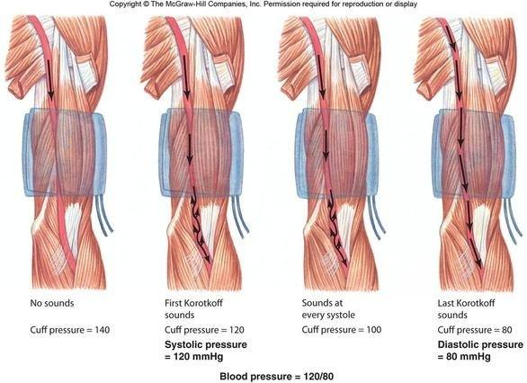 Will temporarily occluding the blood flow to the forearm, while ...