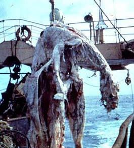 Oarfish  Are Plesiosaurs Still Alive