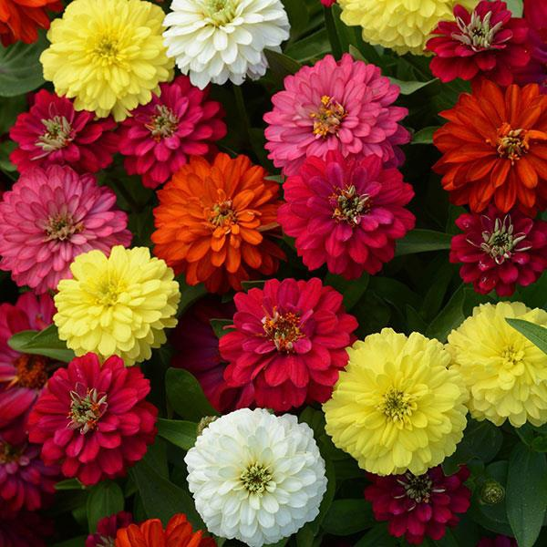 Which Flowers Bloom In Summer In India Quora