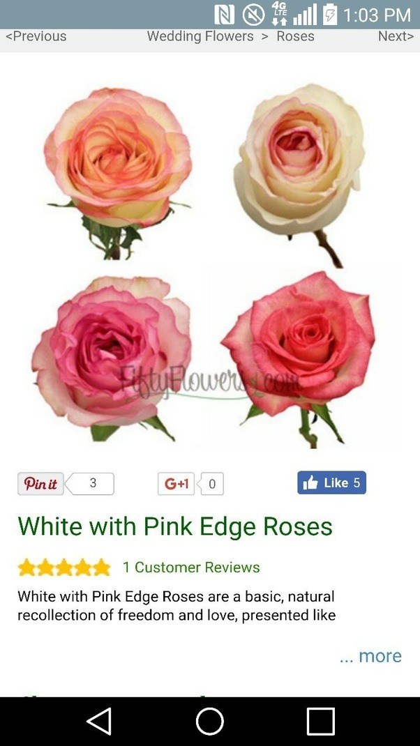 What does pink tipped white roses mean quora mightylinksfo