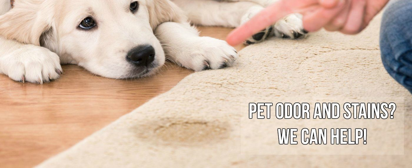 Can Carpet Cleaning Remove Pet Stains
