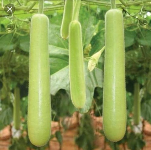 Image result for dhuddi vegetable""