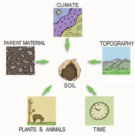 How to explain the factors of soil formation quora for Where to find soil