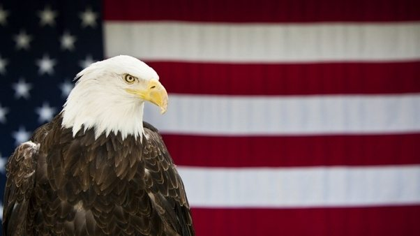 Why Is The Bald Eagle Important To America Quora