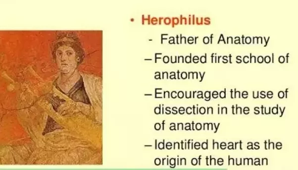 Who Is Called As Father Of Anatomy Quora