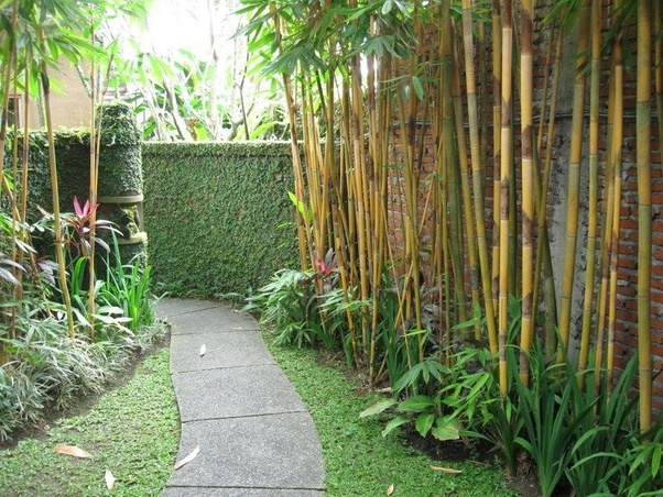 Is Planting Bamboo In Your Yard Always