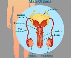 Prostatitis vagy spin