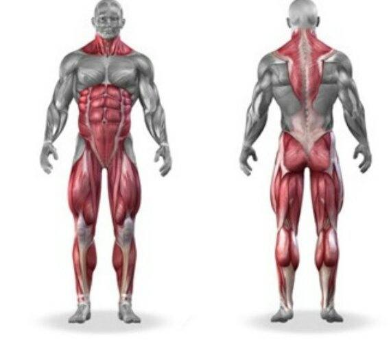 How would one\'s body look like if he only do deadlifts? - Quora