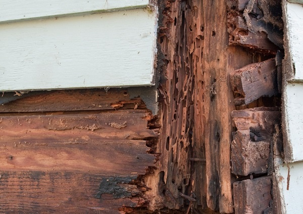 How To Tell If There Are Termites Inside My Walls Quora