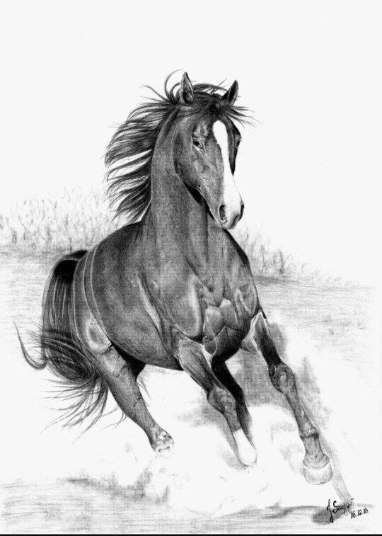 Tutorial: How To Draw a Horse  |Horse Art Drawings