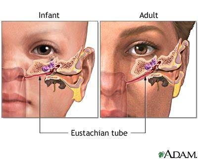 Hasil carian imej untuk sinus and ear connection